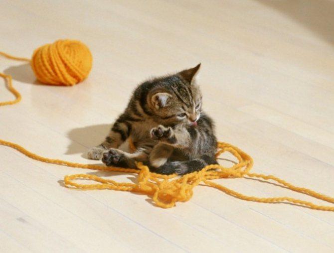чем можно лечить глазки у кота
