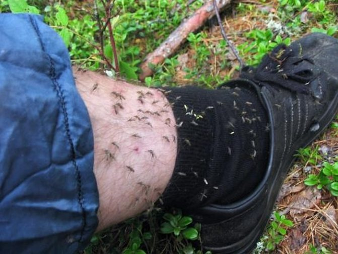 чем питаются комары в лесу