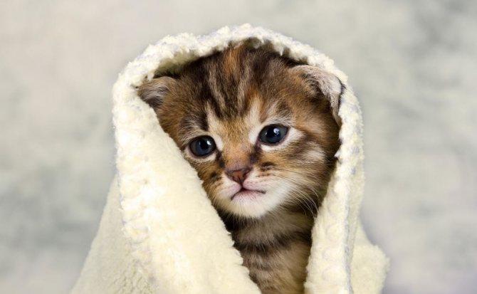 Чем промывать глаза кошке в домашних условиях