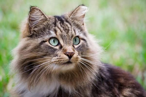 Чем рекомендуется кормить кошку после стерилизации