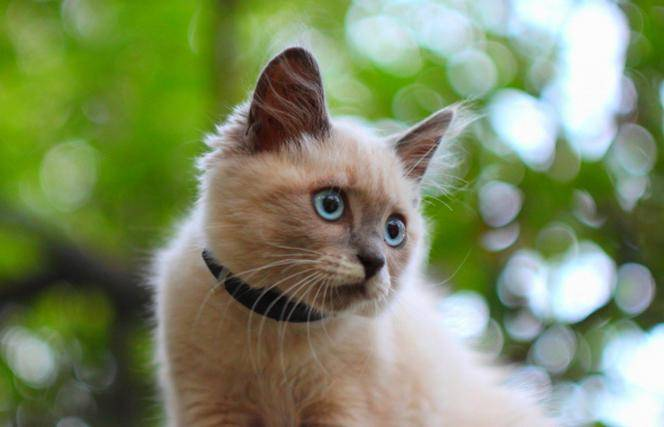 черепно мозговая травма у котенка симптомы и лечение