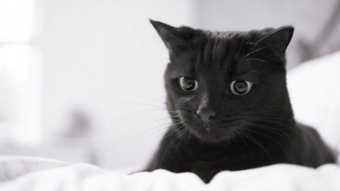 Черный грустный кот