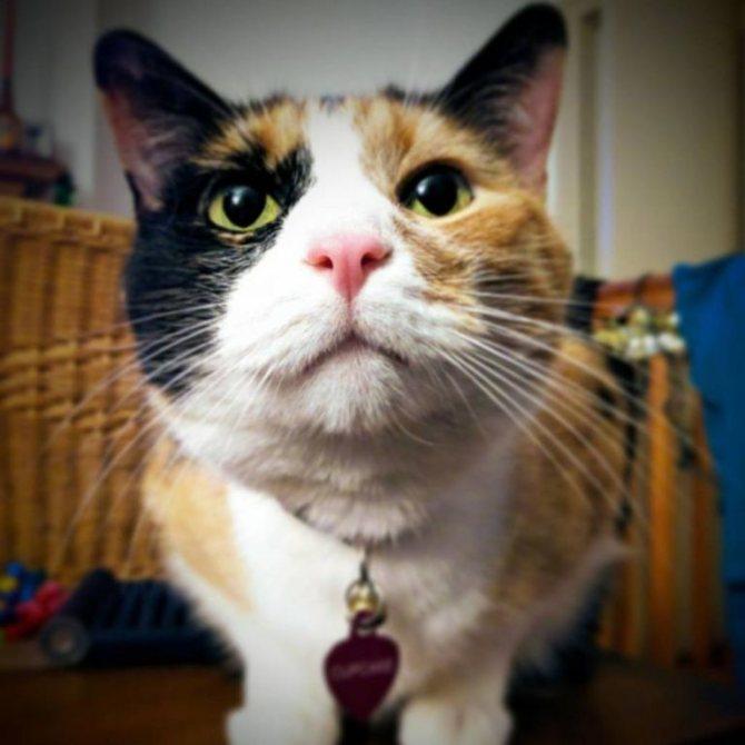 Черный кал у кота: причины и лечение. Корм для кошек для чувствительного желудка