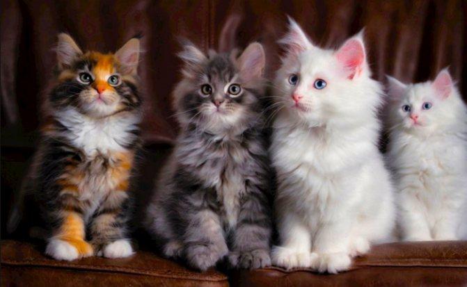 четыре красавца
