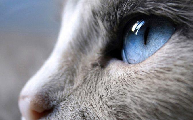 Что делать если кошка рычит без причины