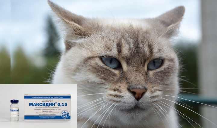 Что делать если кот чихает и у него текут сопли