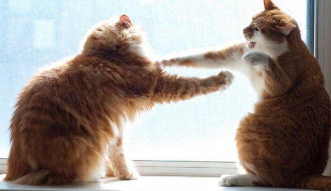 что делать если коты дерутся