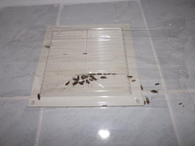 Что делать если от соседей ползут тараканы