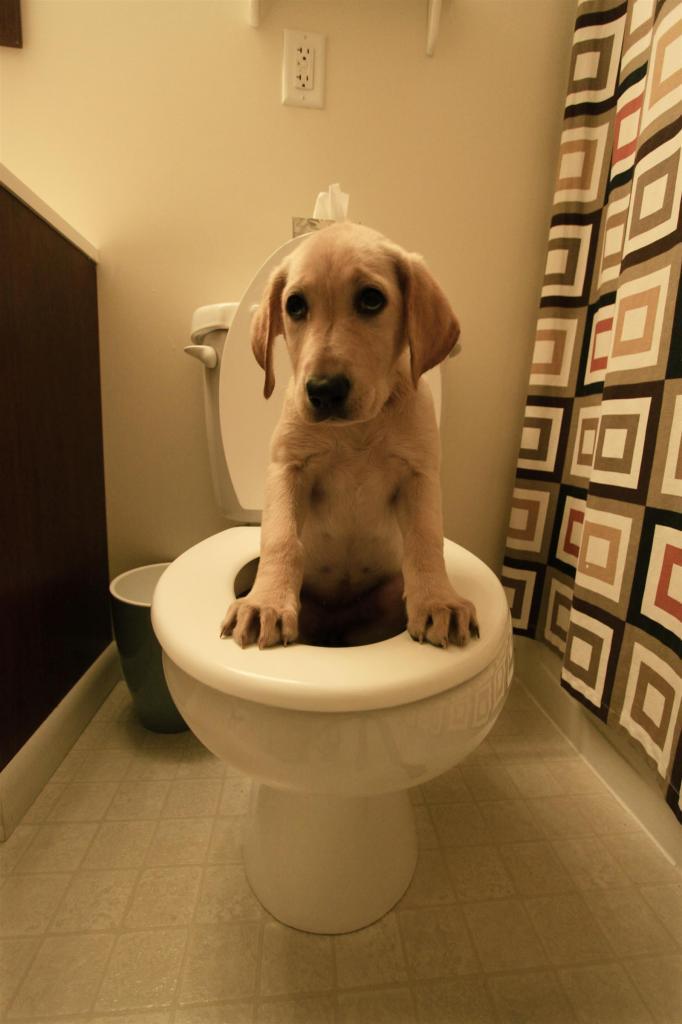 что делать если собака гадит в вольере