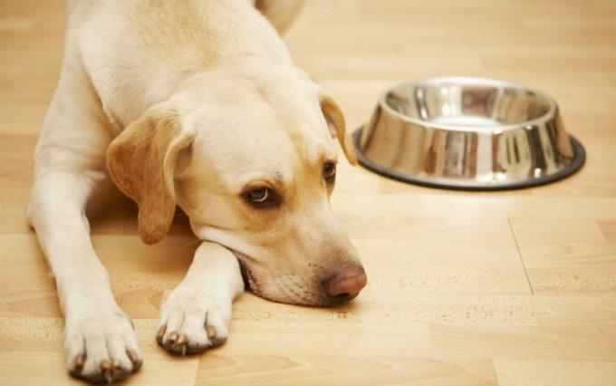 что делать, если собака не пьет воду