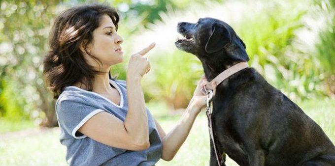 что делать если собака не понимает команды голос