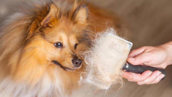 Что делать если у собаки выпадает шерсть