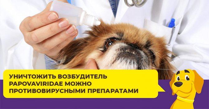 Что делать, если у собаки выросла папиллома на глазу или в пасти