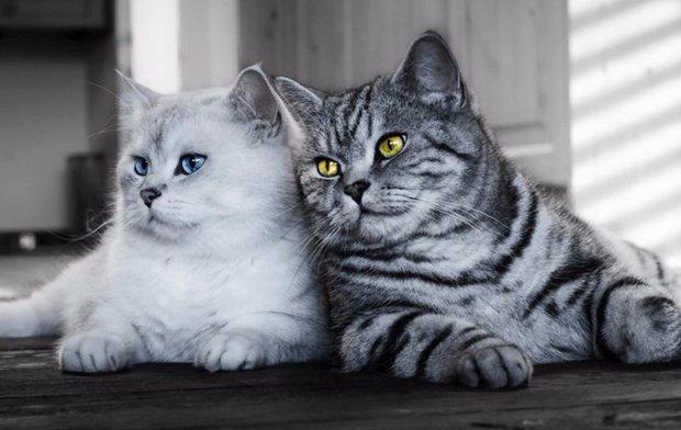 Что делать и как подружить двух котов в одной квартире