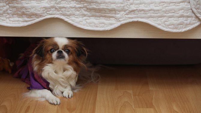 что делать при гипотермии у собак