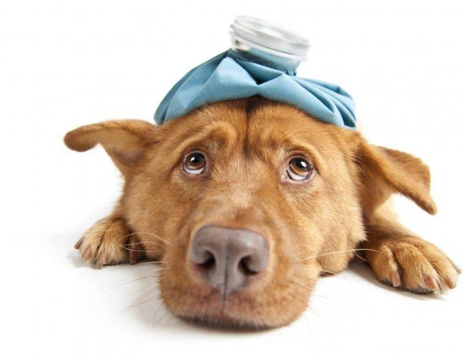 Что делать при поносе у собаки: чем и как лечить