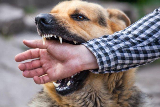 Что делать при укусе бешеной собаки