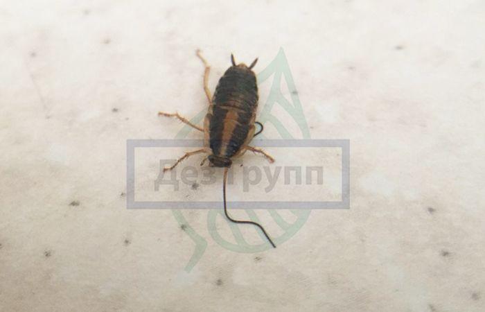 Что едят тараканы дома