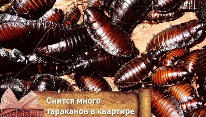 что если снятся тараканы