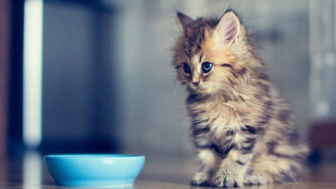 Что кушает котик