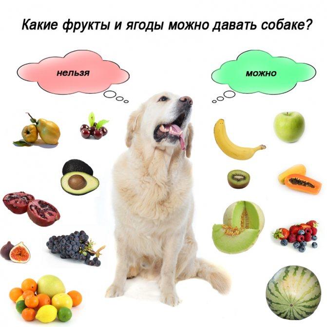 Что можно, а что нельзя есть собаке