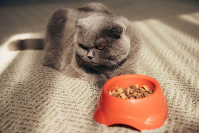 Что нельзя делать если кошку рвет после еды