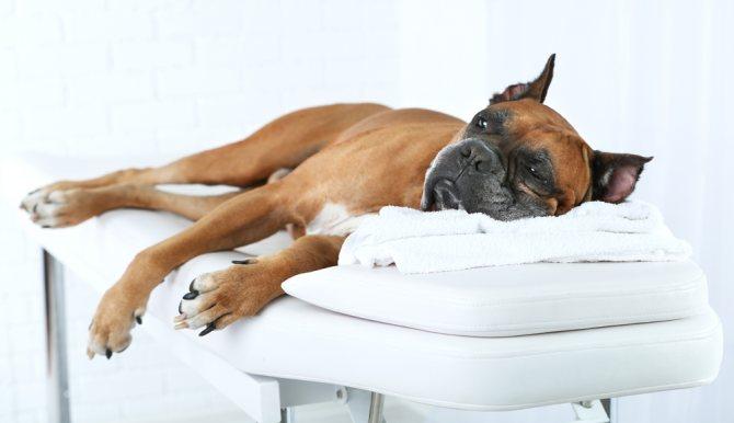Что нельзя делать если у собаки отказывают задние лапы