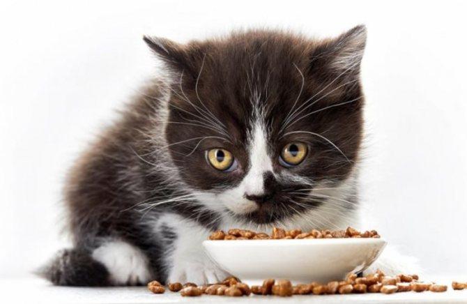 Что нужно кушать маленькому котенку