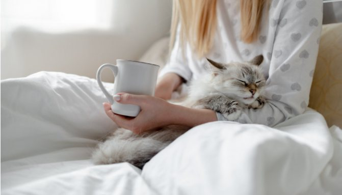 Что означает кошачье урчание для людей