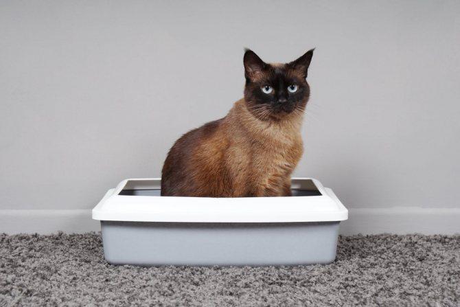 что считается запором у кошки