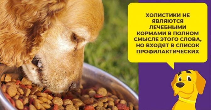 Что такое корм класса холистик, и как подобрать подходящее питание для своей собаки