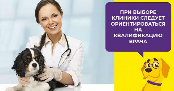 Что такое пиометра и как лечить воспаление матки у собак