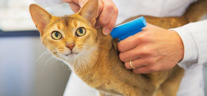 Что указывается в ветеринарном паспорте для кошки