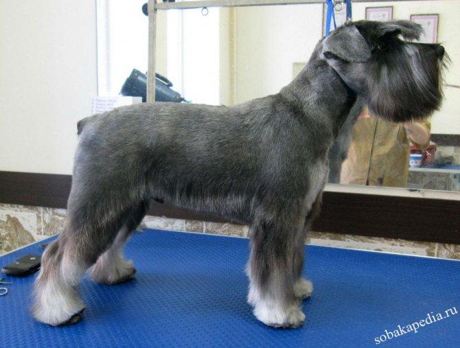 Что важно знать про тримминг и каким собакам он необходим
