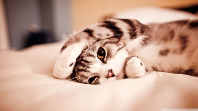 Цирроз печени у кошек симптомы