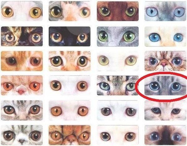 cvet1 min - Кот с карими глазами