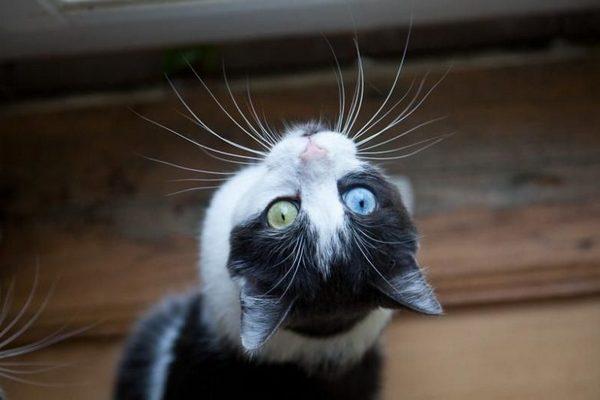 cvet8 min - Кот с карими глазами