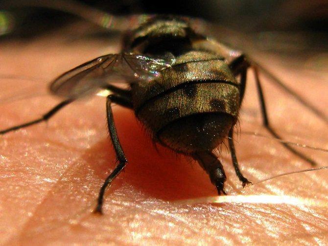 Данные паразиты могут представлять серьезную опасность для людей