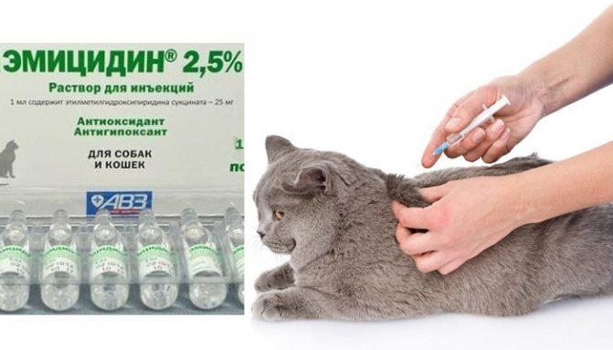 Делаем укол коту