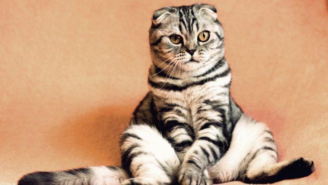 День кошек: интересные факты и самые известные коты в России