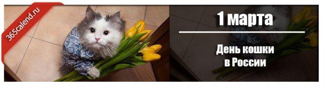 День кошки в России