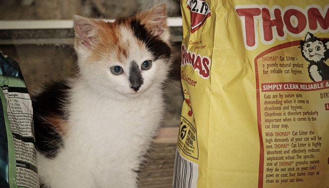 Десять мифов о питании для кошек