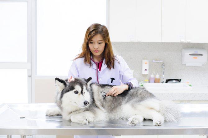 Диагностика и лечение инсульта у собак