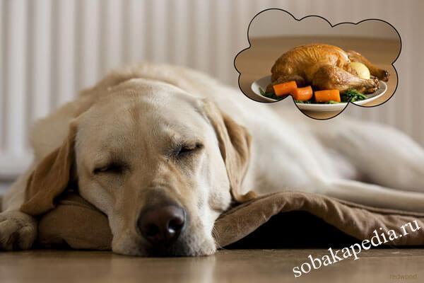 Диагностика и терапия дисбактериоза у собак