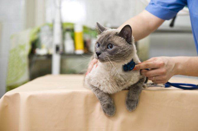 диагностика коронавируса у кошек
