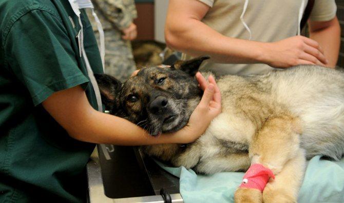Диагностика лямблиоза у собак