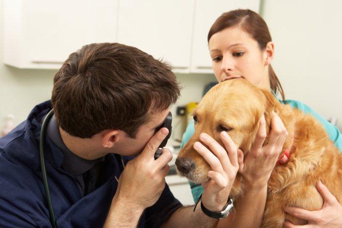 диагностика мутных глаз у собаки