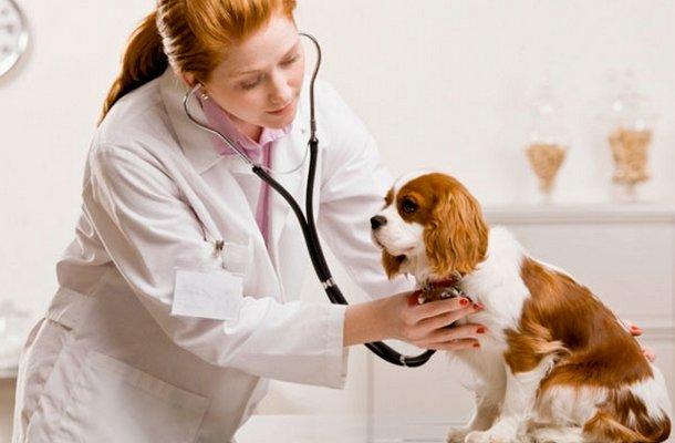Диагностика собаки