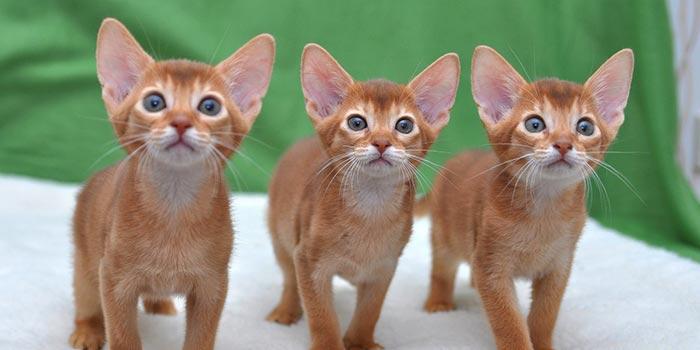 диарея с кровью у котов