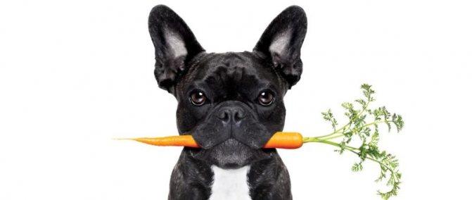диета для собаки